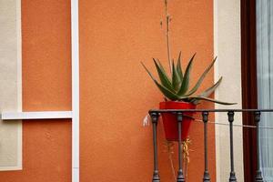 vackra växter på gatan foto