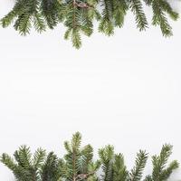 barrträd grenar isolerad på vit bakgrund foto