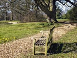 träbänk och träd i en park foto