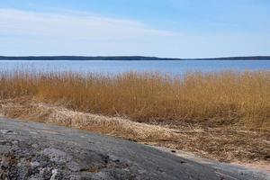 torra växter på Östersjökusten i Finland på våren. foto