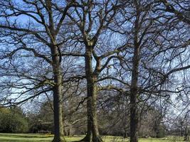 tre vinterträd i en park foto