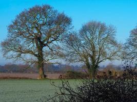kala träd i ett fält på en frostig morgon foto