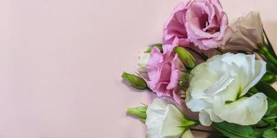 rosa och vita rosor blommar med copyspace foto