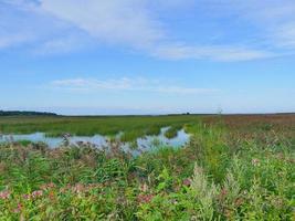 blommande översvämmade ängar, sjön är bevuxen med tätt vass sommarlandskap foto