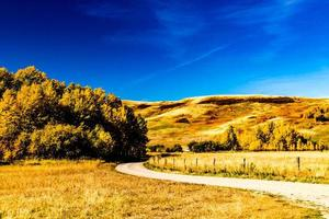torrt gräs och blå himmel foto