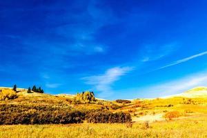 gult gräs och blå himmel foto