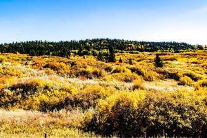 gräsbevuxen åker och himmel foto