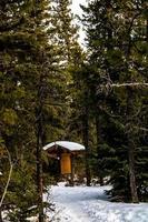 skydd i en skog foto