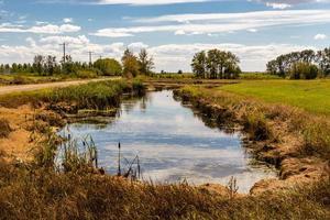 kanal med vattenfåglar foto