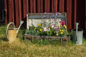 blommor planterade i en gammal resväska foto
