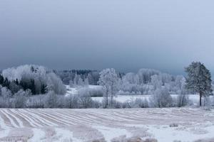 vinterlandskap med träd täckta av frost foto