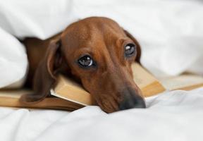 bedårande hund som lägger på böcker foto