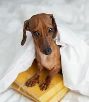bedårande hund sitter på böcker foto