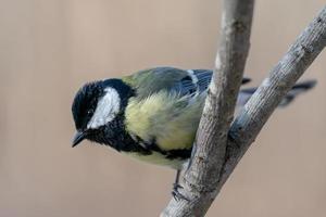 fågel uppflugen på en gren foto