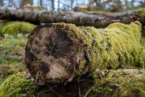 mossatäckt trädstam foto