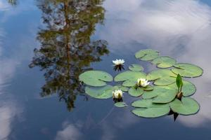 liljedamm med reflektioner av himlen foto