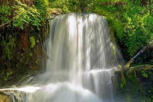 litet vattenfall i den gröna skogen foto