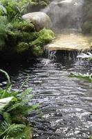 sorter tropiska regnskogar lövverk foto