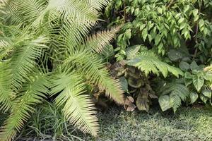 växter i en tropisk trädgård foto