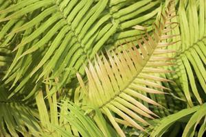 tropiska växter i en trädgård foto