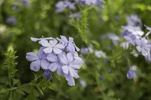 grön sommarträdgård av utvägens exteriör foto