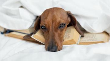 söt hund som lägger på böcker foto