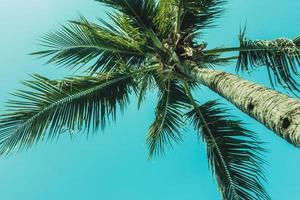 palmträd på himlen foto