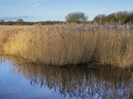 vass reflekteras i en damm vid långt naturreservat, norra Lincolnshire, England foto