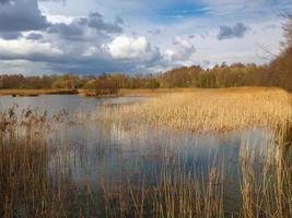 potteric carr naturreservat, södra Yorkshire, England foto
