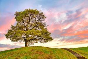 soloträd på bergstoppen vid solnedgången foto