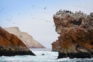 ballestas ö i Peru foto