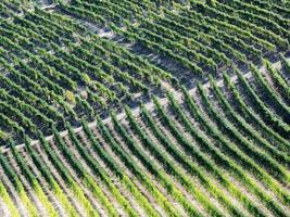 vingårdar på hösten foto