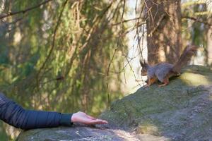 person som försöker mata en ekorre foto