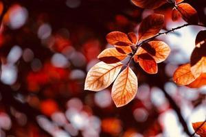 röda höstlöv foto
