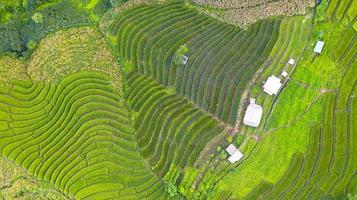 Flygfoto över de gröna terrasserade risfälten foto