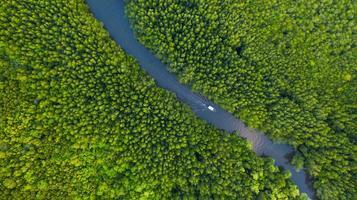 Flygfoto ovanifrån av båten vid floden i mangroveskog bevarande i Thailand foto