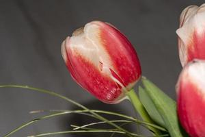 röda tulpaner i fältet foto