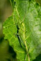grön vortsbiter sitter på ett blad i solljus foto