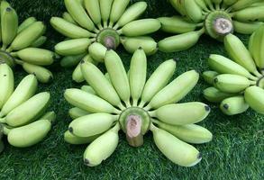 många gröna bananer foto