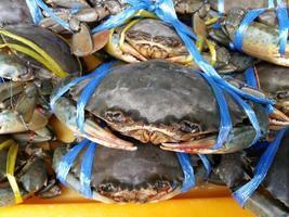 färsk krabba skaldjur foto