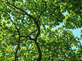 ekar med vackra färska gröna vårlövverk foto