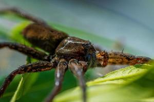 närbild av en flotte spindel i solljus foto