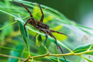 flotte spindel på löv foto