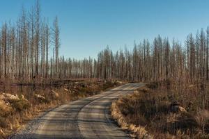 liten väg som passerar en död skog härjad av en skogsbrand foto