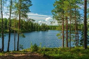 frodig grön utsikt från en liten sjö i en skog foto