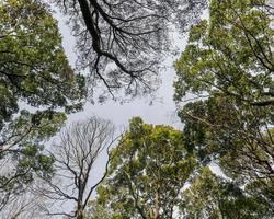 trädtak i skogen foto