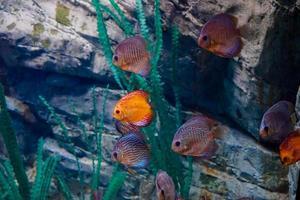 fisk världshaven i ett stort akvarium foto