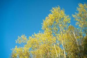 höstlandskap med gula löv av träd mot foto