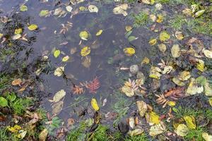 naturlig bakgrund med en vattenpöl och höstlöv foto