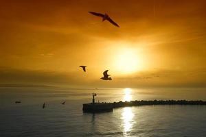 solnedgång över marinmålning med måsar foto